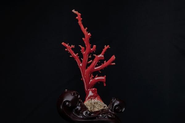 红珊瑚真假鉴别——如何区分染色海竹和天然红珊瑚